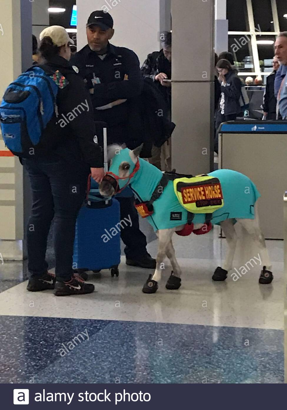 you might not be surprised to see a dog on a flight these days but a horse would have most people doing a double take in their seats that s exactly what happened alamy