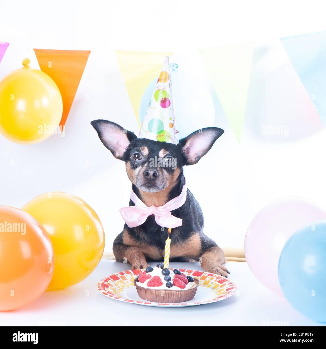 Marvelous Dog Puppy With Happy Birthday Cake A Party Hat Birthday Card Funny Birthday Cards Online Unhofree Goldxyz