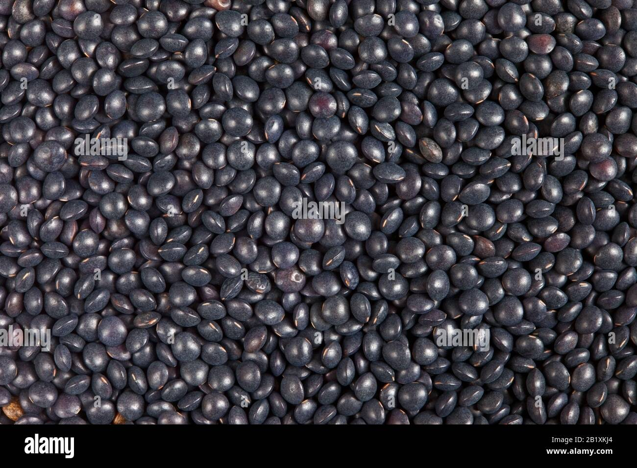 Black Beluga Lentils Texture Background Lentils Are Rich In Protein Carbohydrates Fiber And Low In Fat Stock Photo Alamy