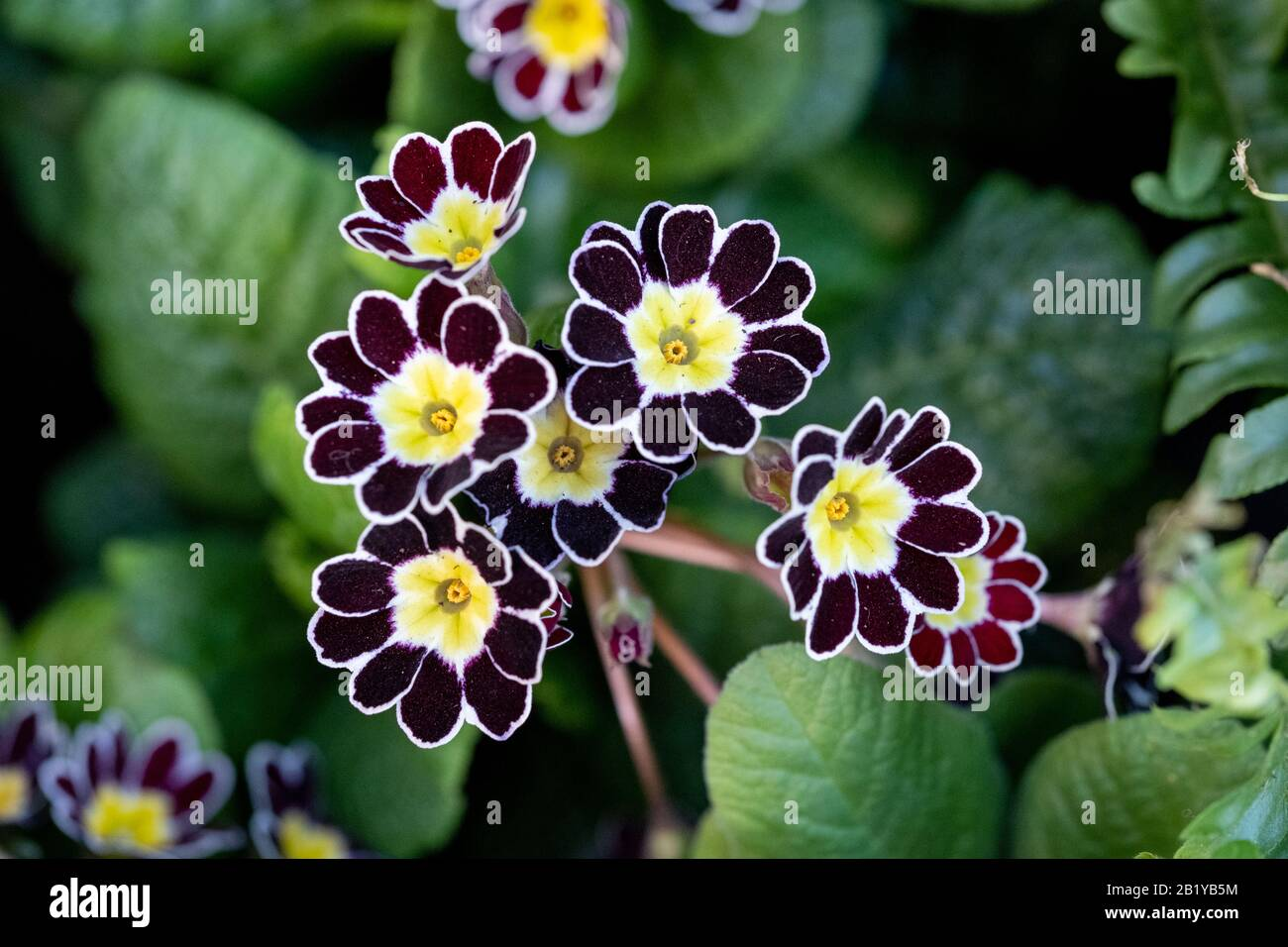 Silver Lace High Resolution Stock Photography and Images - Alamy