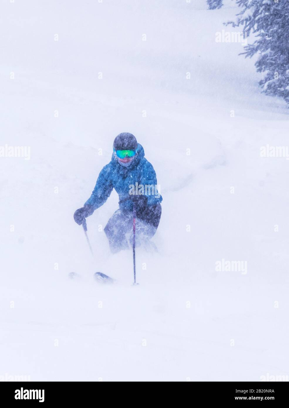Female skier in fresh powder at Monarch Mountain ski & snowboard resort on the Continental Divide in Colorado, USA Stock Photo