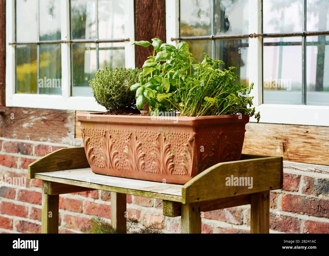 Kitchen herbs in a terracotta container in front of an old window. Stock Photo