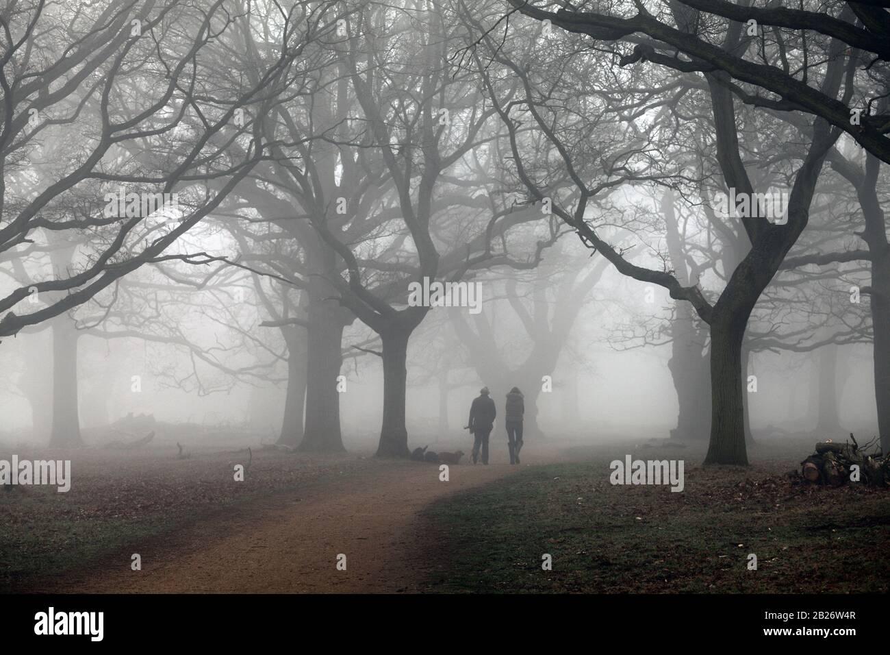 Winter in Richmond Park London. Stock Photo