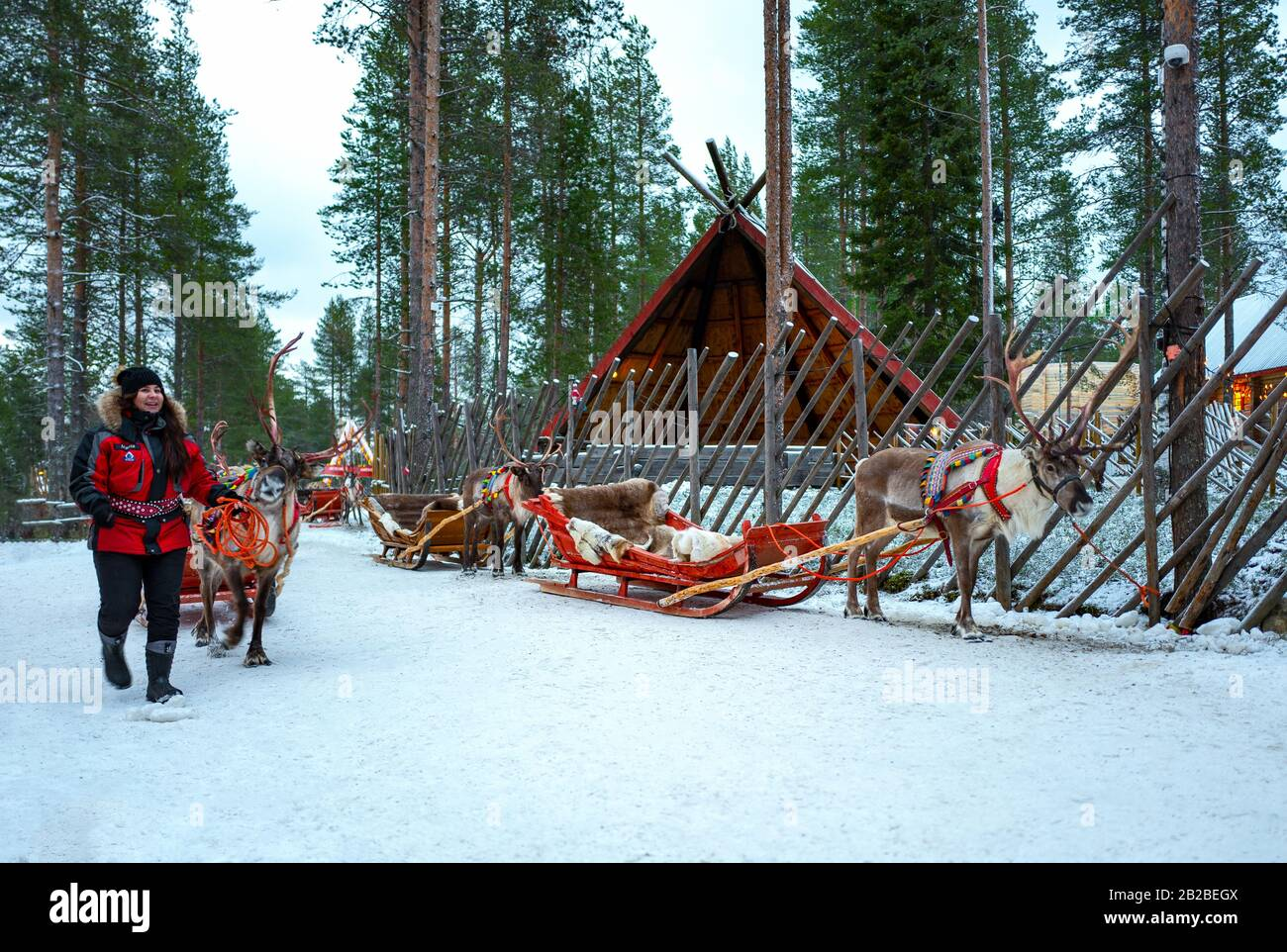 Rovaniemi, Finland, Tourists on reindeer-drawn sledges in the Santa Claus Village and Park Stock Photo