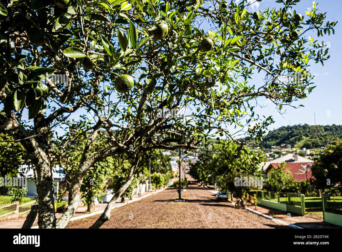 Mondaí Santa Catarina fonte: c8.alamy.com