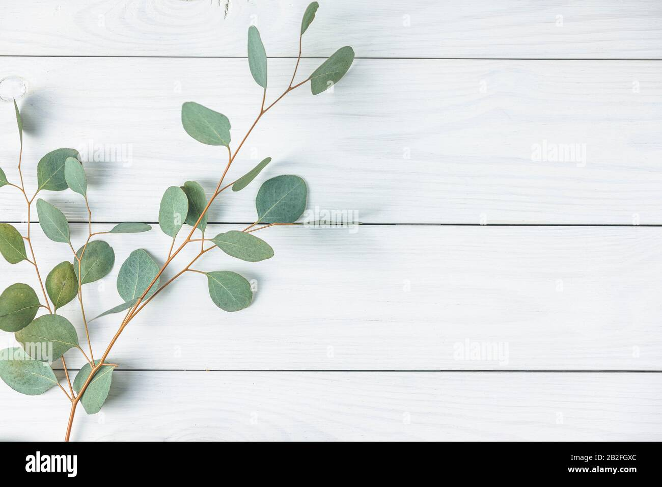 eucalyptus leaves on white wooden background frame made of eucalyptus branches flat lay top view copy space 2B2FGXC