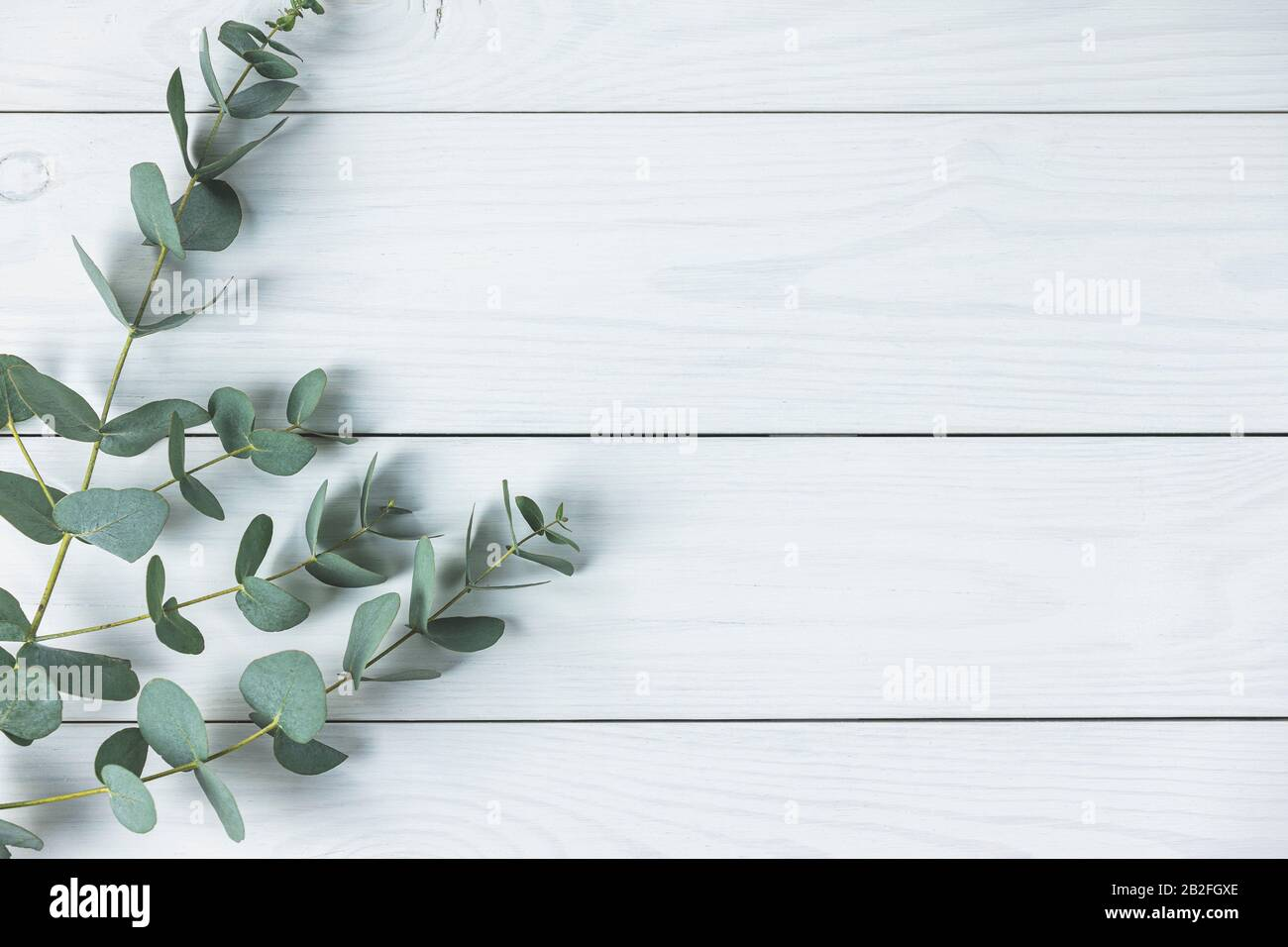 eucalyptus leaves on white wooden background frame made of eucalyptus branches flat lay top view copy space 2B2FGXE