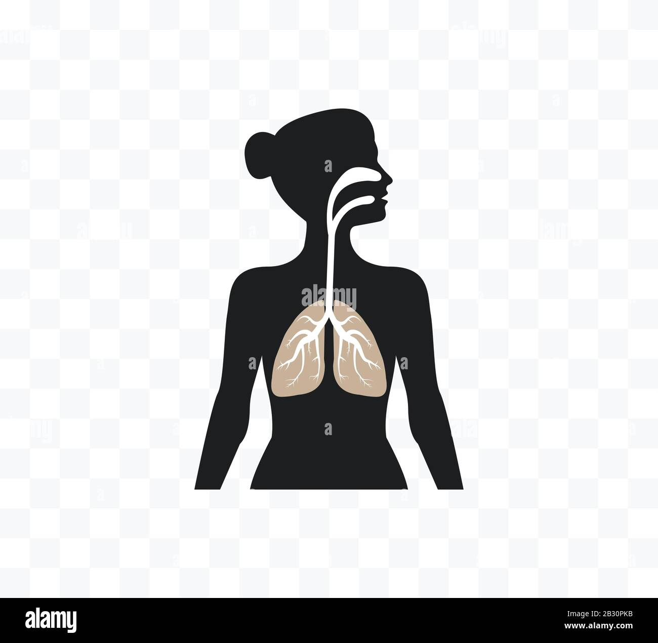 Illustration Body Woman Biology High Resolution Stock Photography And Images Alamy