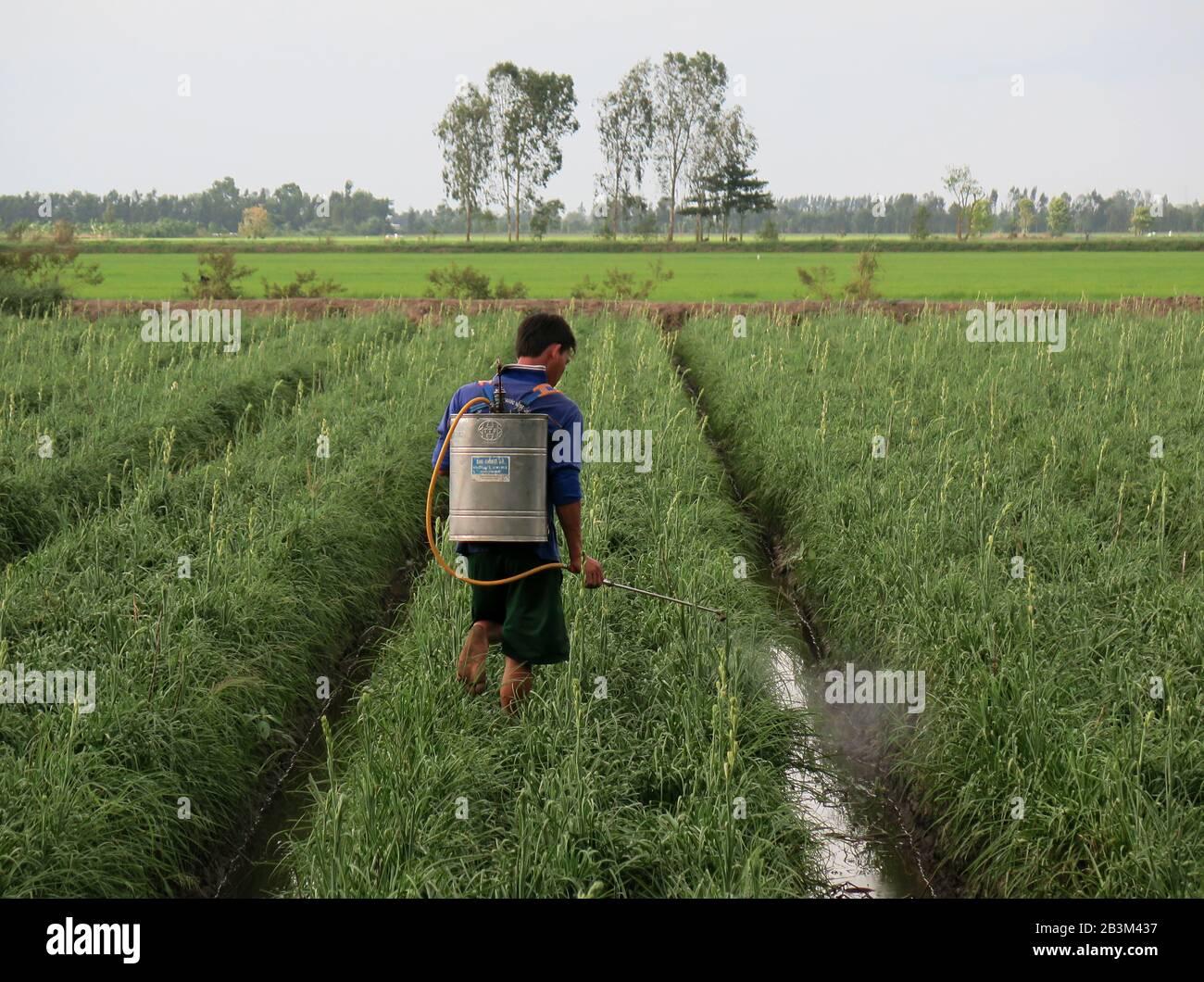 Spritzen, Unkrautvernichtung, Blumenbeet, Mekongdelta, Vietnam Stock Photo