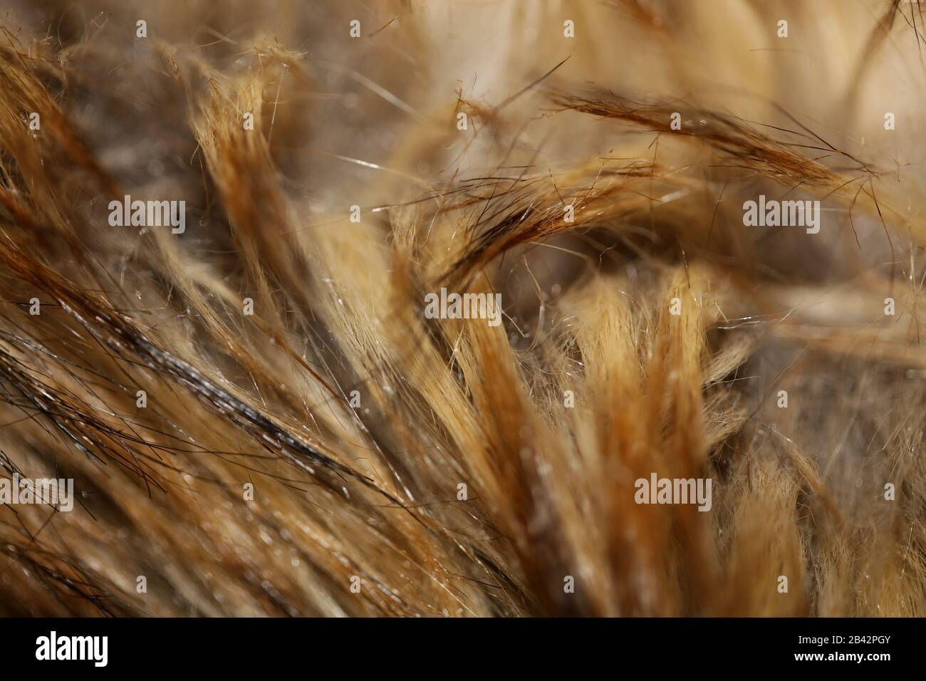 Artificial brown jacket hairs macro background stock photography high quality Stock Photo