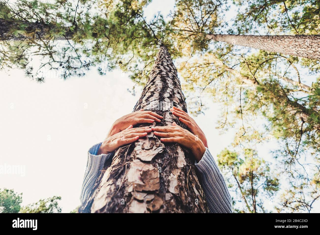 People protecting trees from deforestation concept with couple of senior caucasian hands hugging with love a pine in the wood - earth's day and save the planet positive message Stock Photo