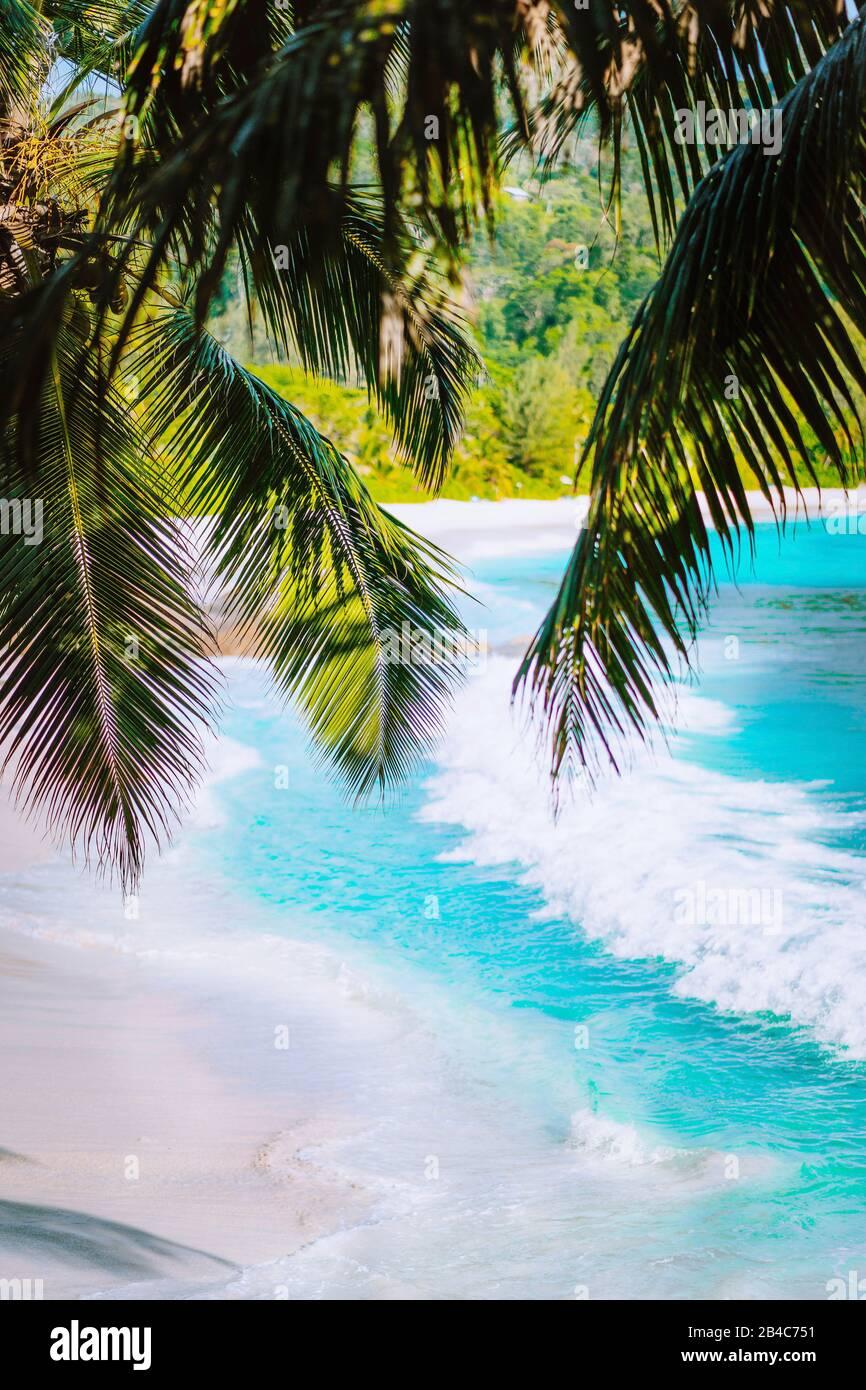 Palm tree leaves on beautiful tropical paradise Anse intendance beach. Ocean wave roll on sandy beach with coconut palm trees. Mahe, Seychelles. Stock Photo
