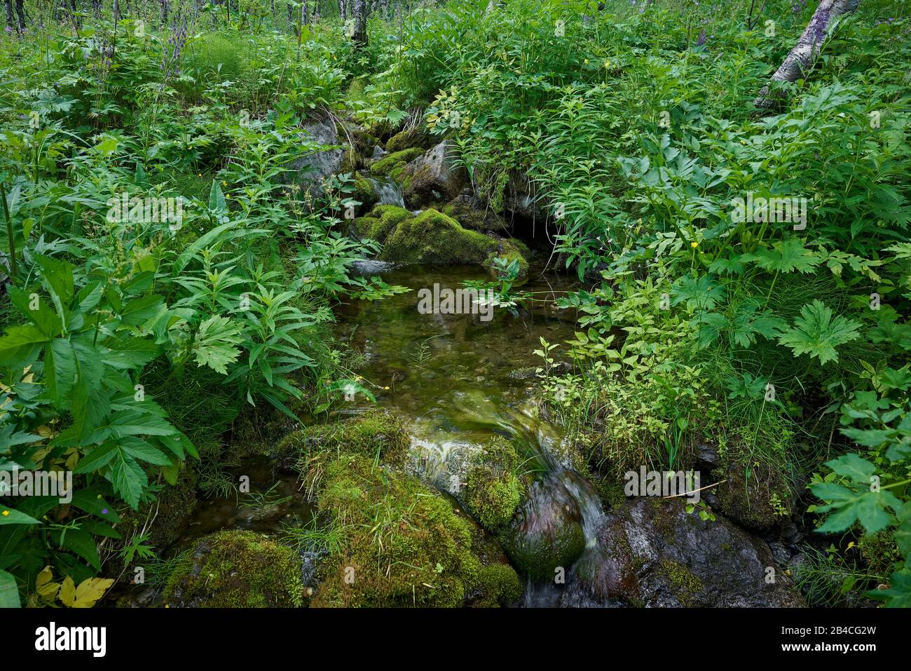 Sweden,Lapland,Sarek national park, Rapaätno valley, Small creek with herbs and flowers Stock Photo