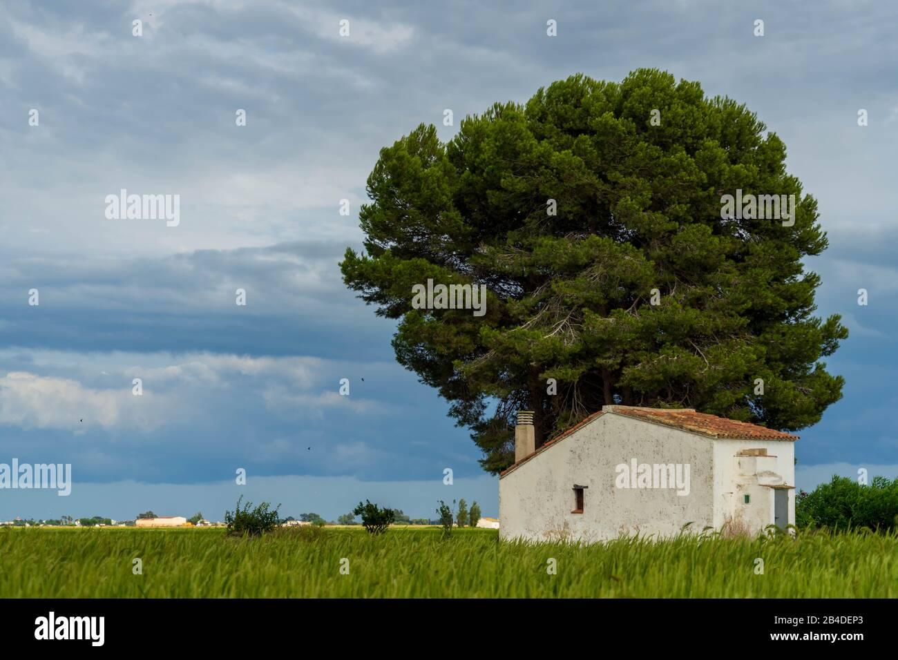 A Caretaker's Hut in the Rice Fields of Ebro River Delta Stock Photo