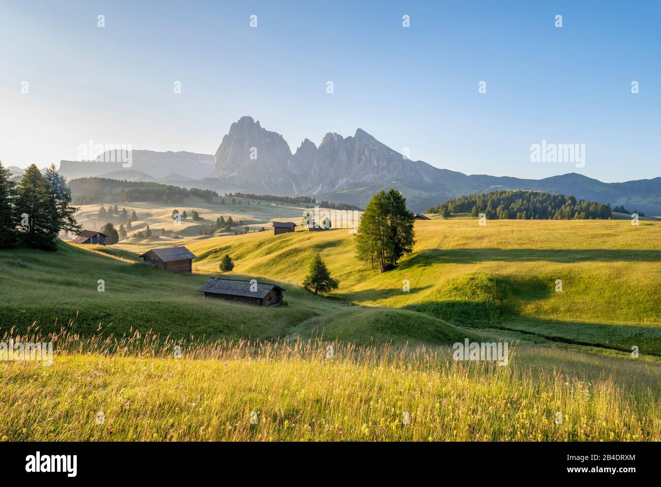 Alpe di Siusi, Castelrotto, South Tyrol, Province of Bolzano, Italy, Europe. Spring on the Alpe di Siusi with views of the Langkofel massif Stock Photo