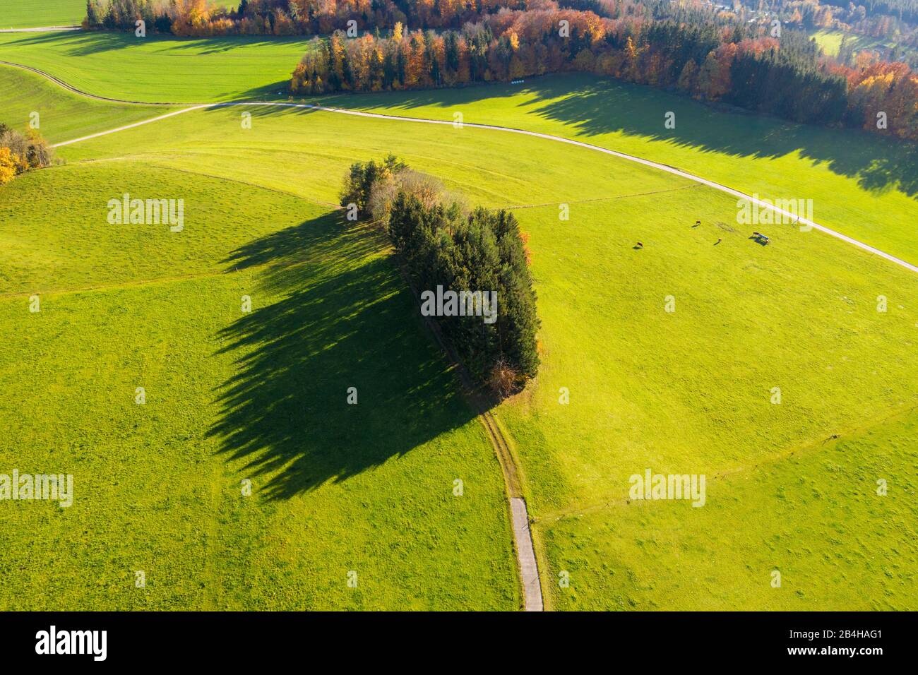 Group of trees on pastureland near Peretshofen, Tölzer Land, drone recording, Alpine foothills, Upper Bavaria, Bavaria, Germany Stock Photo