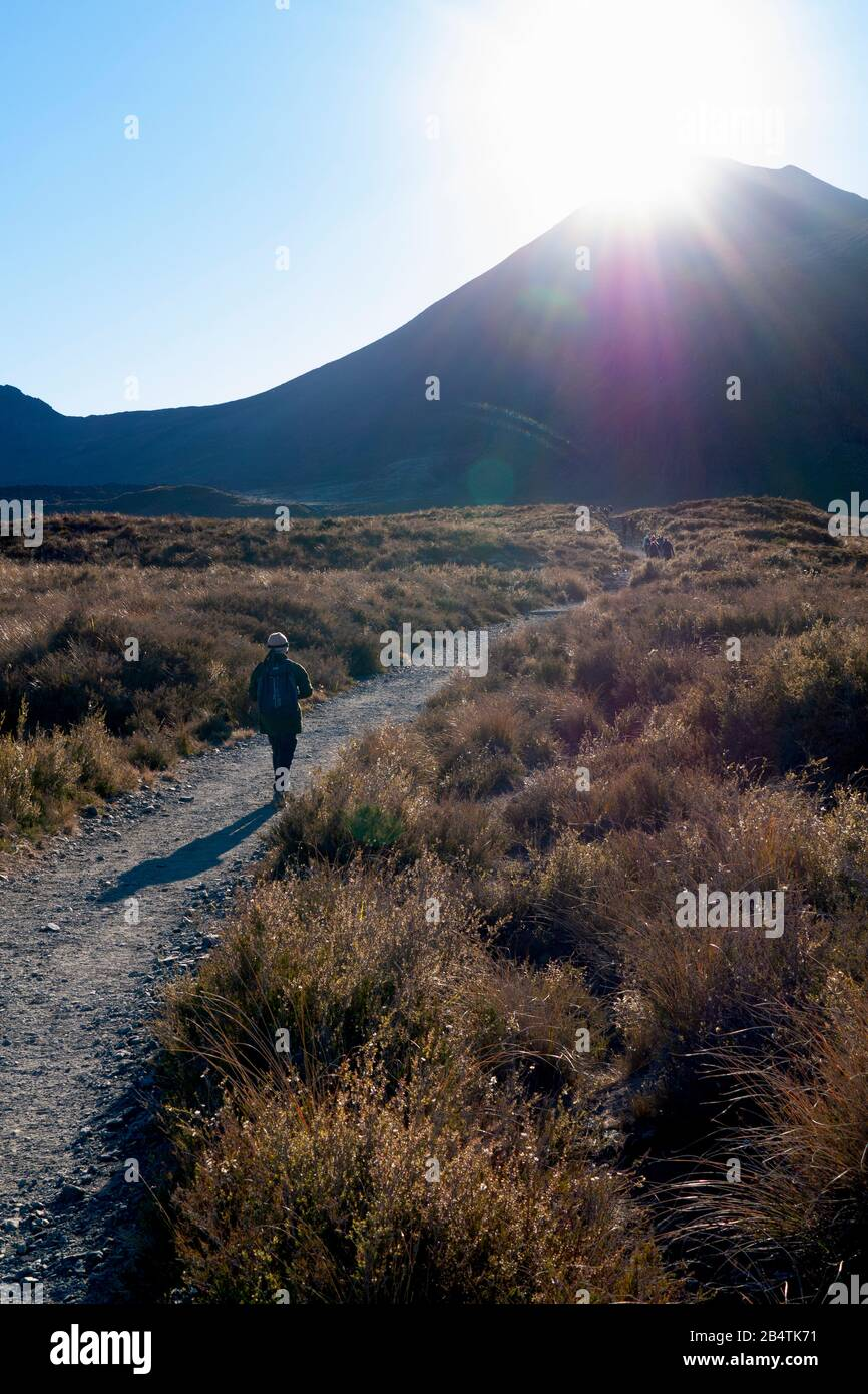 Hikers begin the 19km trek of Tongariro Alpine Crossing, as the early morning sun bursts over the cone of Mount Ngauruhoe, New Zealand. Stock Photo