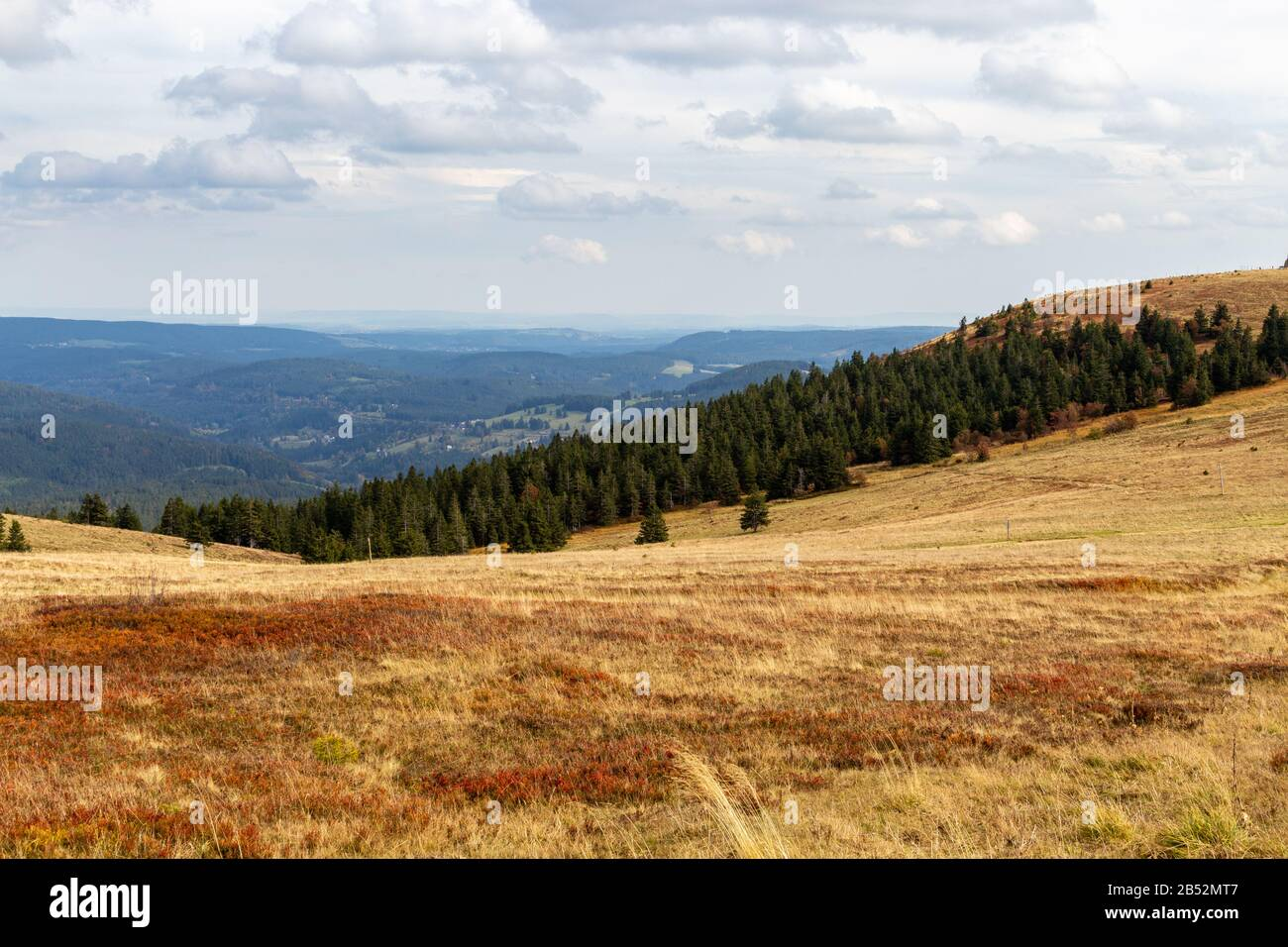 Landscape on the summit of the Feldberg, Black Forest, Germany Stock Photo