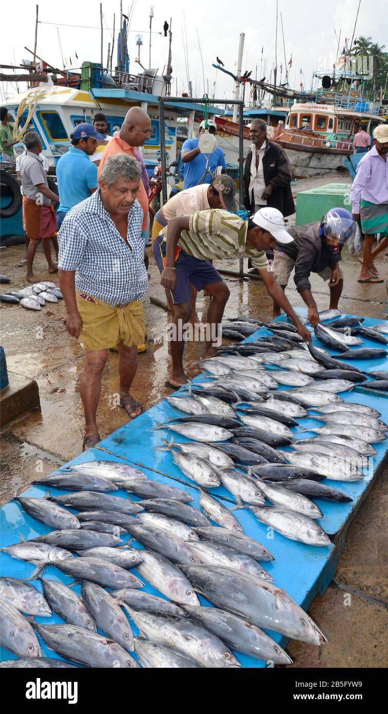 Fischmarkt, Hafen, Tangalle, Sri Lanka Stock Photo