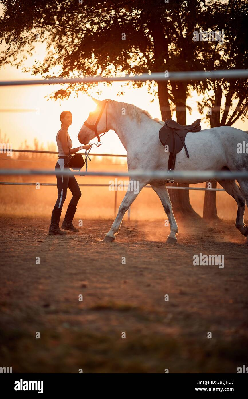 Woman Rider Trains A Beautiful Horse On A Farm At Sunset Stock Photo Alamy