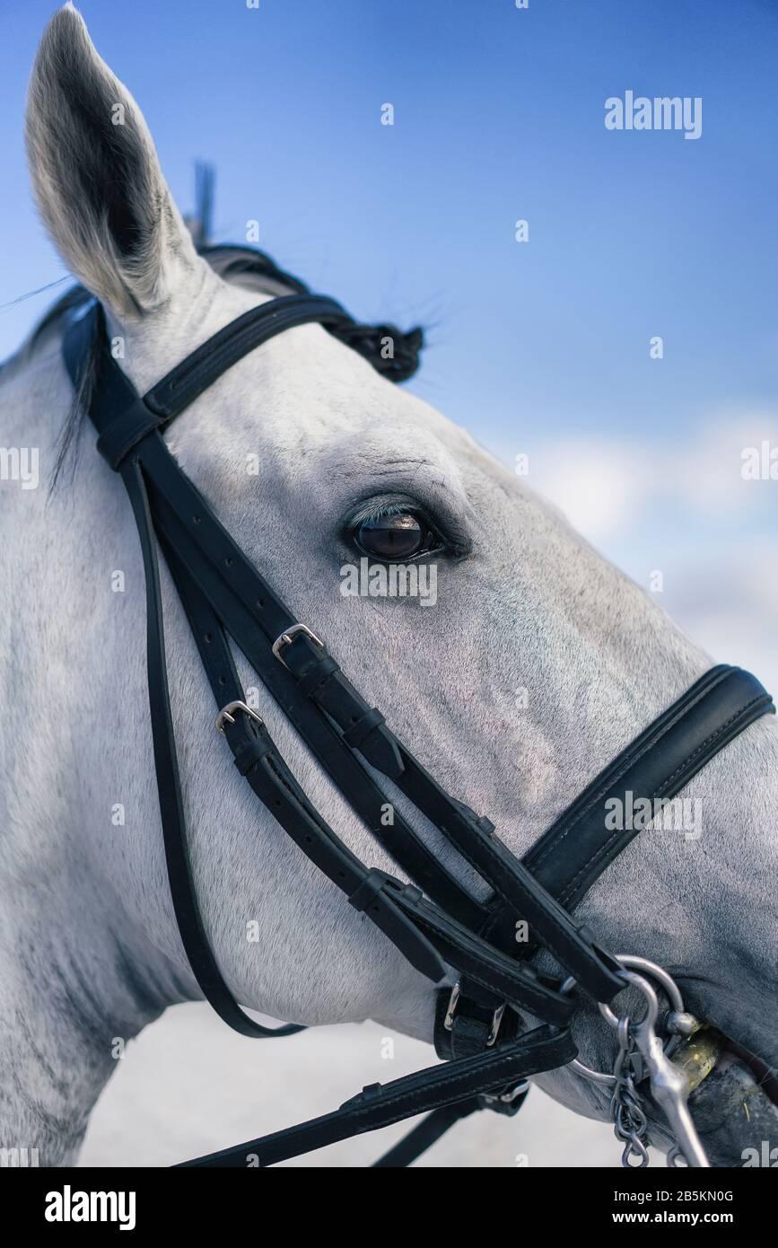 Detail Of White Horse Eye Portrait Stock Photo Alamy