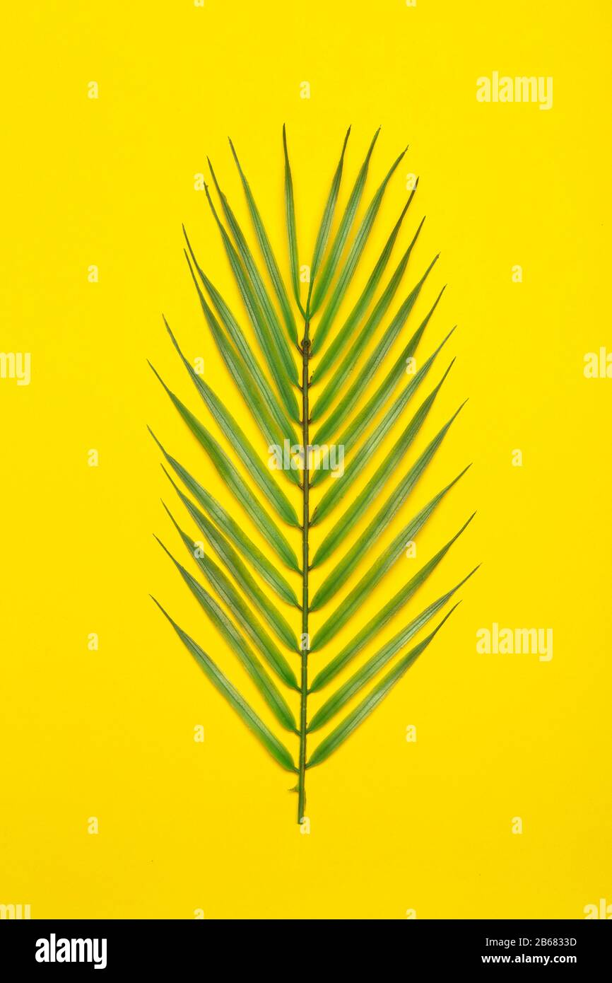 Tropical Leaves On A Yellow Background Tropical Leaves Of Jungle Palm Trees On A Colored Minimal Background Flatlay Concept Copy Space Stock Photo Alamy Houseplant leaves turn yellow for a number of reasons but with proper attention and care the plant can often be saved. alamy