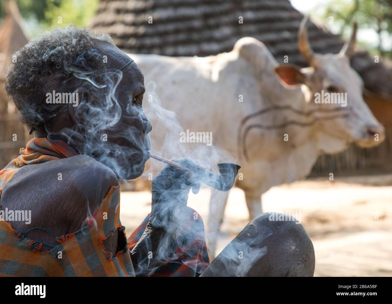 Old Larim Tribe Woman Smoking Pipe In Front Of A Cow Boya