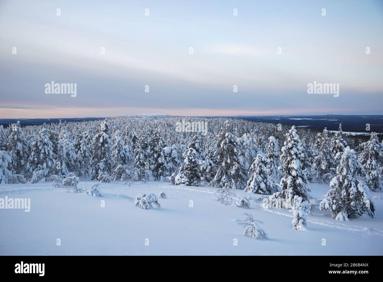 Snow covered trees in Lapland, Finland create a wonderful and beautiful winter wonderland landscape during sunset. They're called popcorn trees. Stock Photo