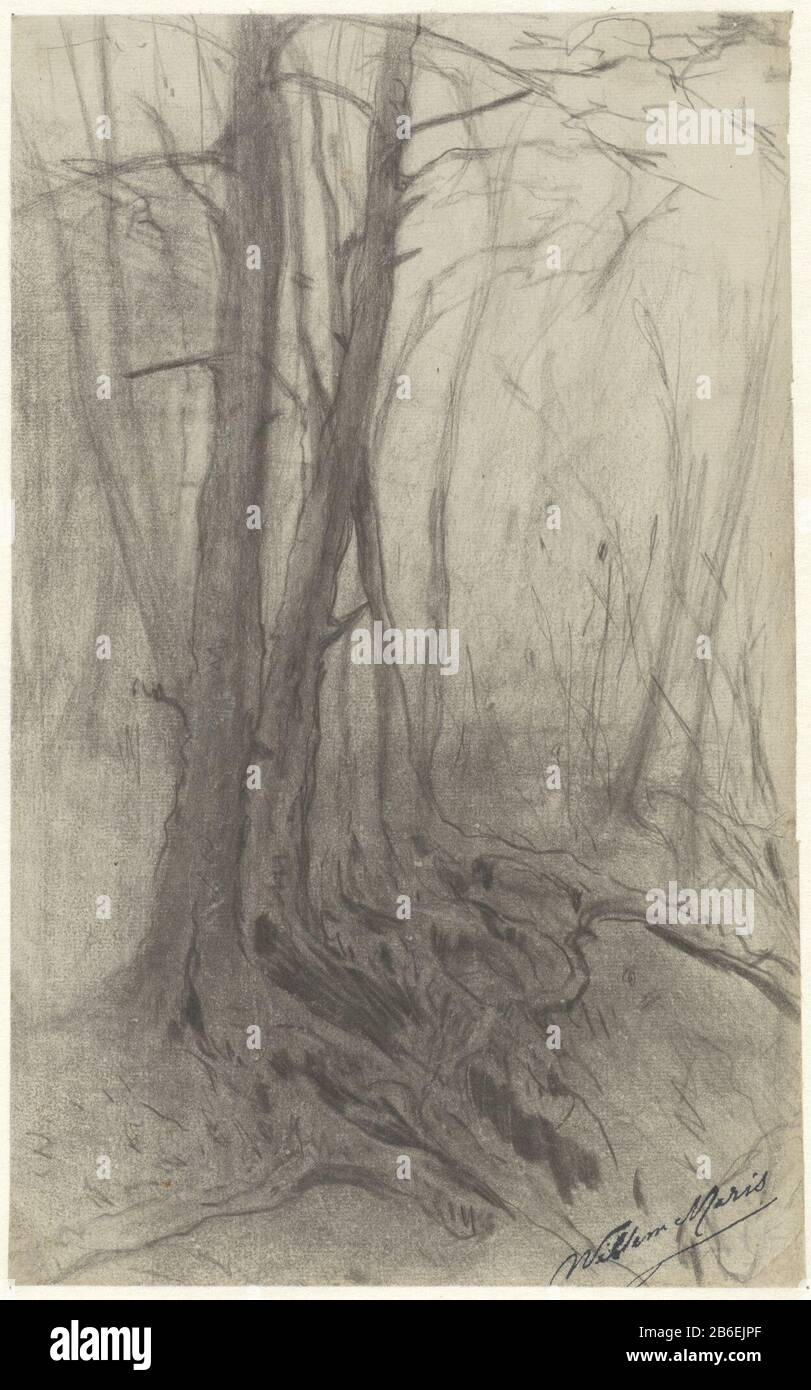Trees In A Forest Trees In A Bos Object Type Drawing Object Number Rp T 1954 136 R Manufacture Creator Artist William Mari Date 1854 1910 Physical Features Black Chalk Material Paper Chalk