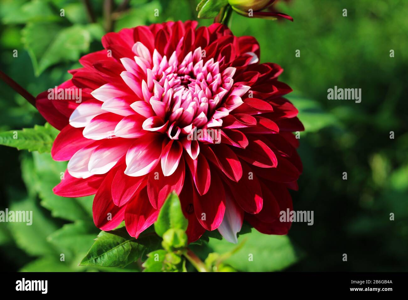 Colorful Closeup Vibrant Flower In The Garden Macro Photography Beautiful Nature Wallpaper With Soft Green Background Stock Photo Alamy