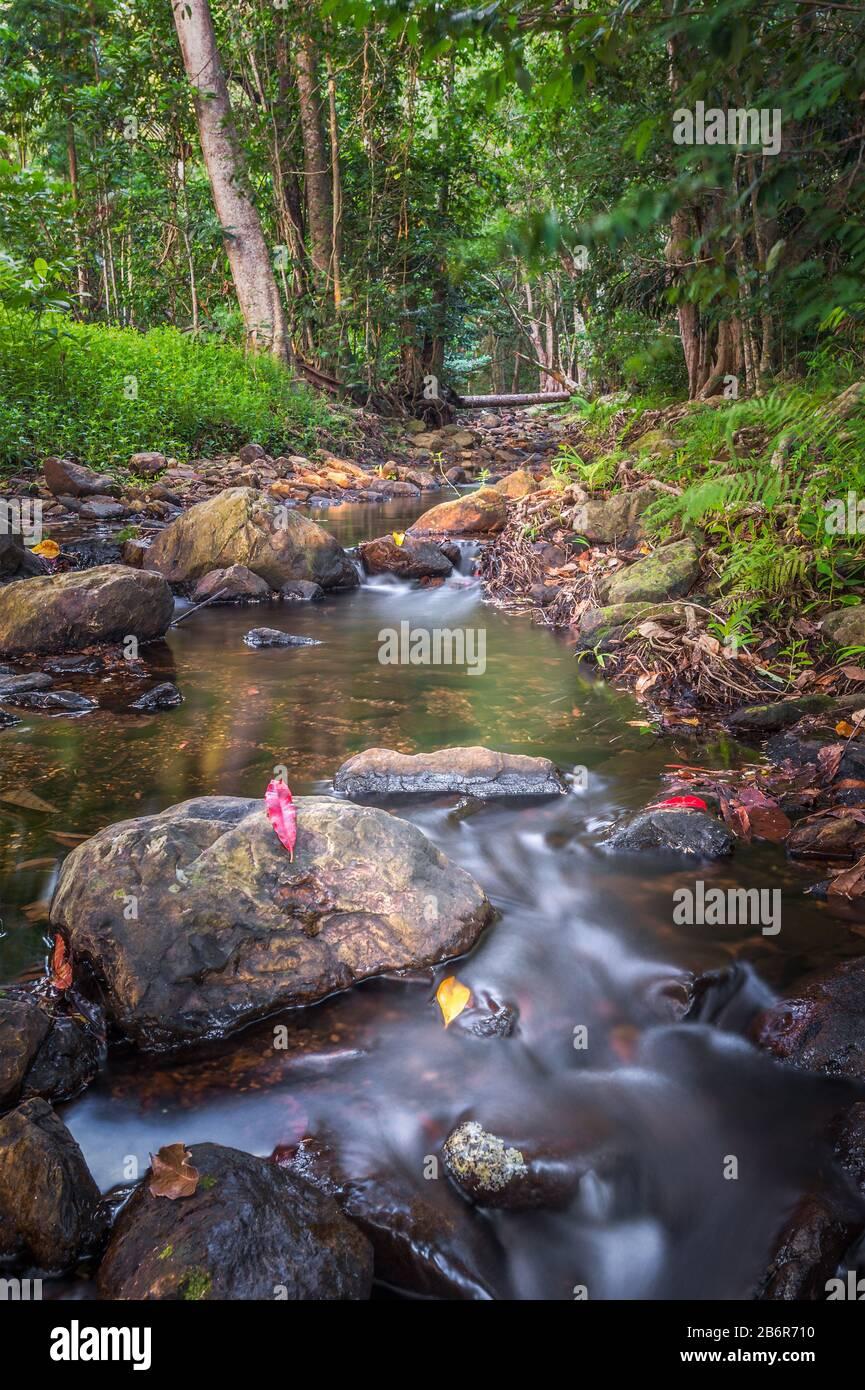 Low viewpoint of a lush and pristine stream flowing through tropical rainforest ecosystem in Far North Queensland, Australia. Stock Photo