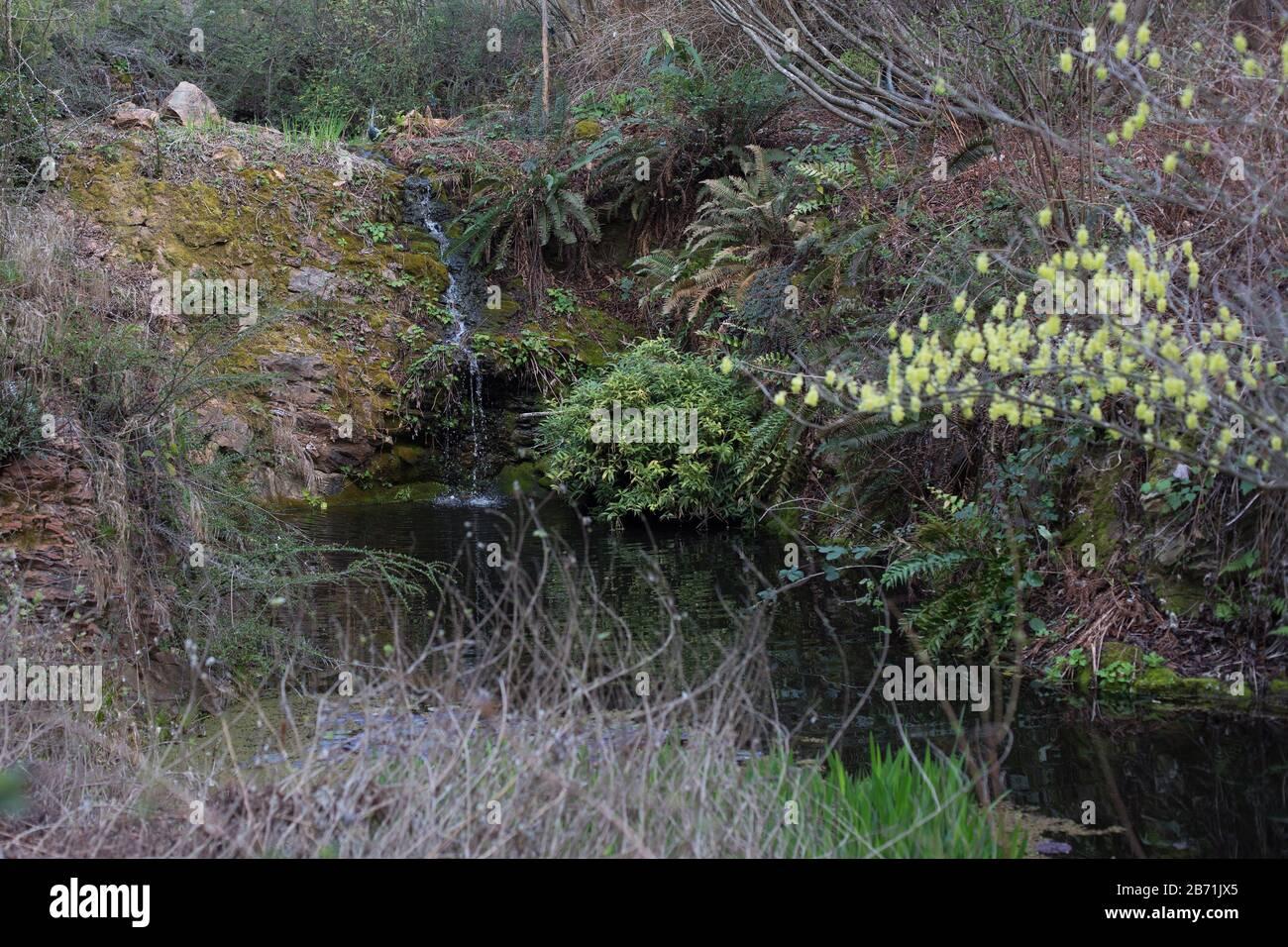 A Waterfall Running Through Quarryhill Botanical Garden In Glen Ellen California Usa Stock Photo Alamy
