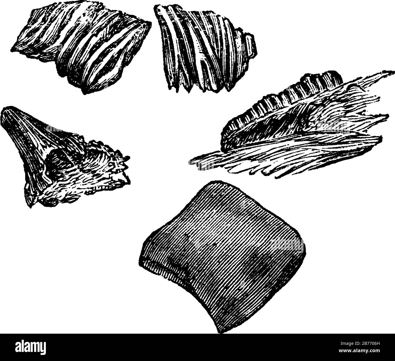 Carboniferous is the fifth period of the Palaeozoic era, between the Devonian and Permian periods. Shown here is the teeth and scales of carboniferous Stock Vector