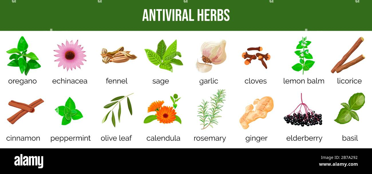 what is antiviral herbs