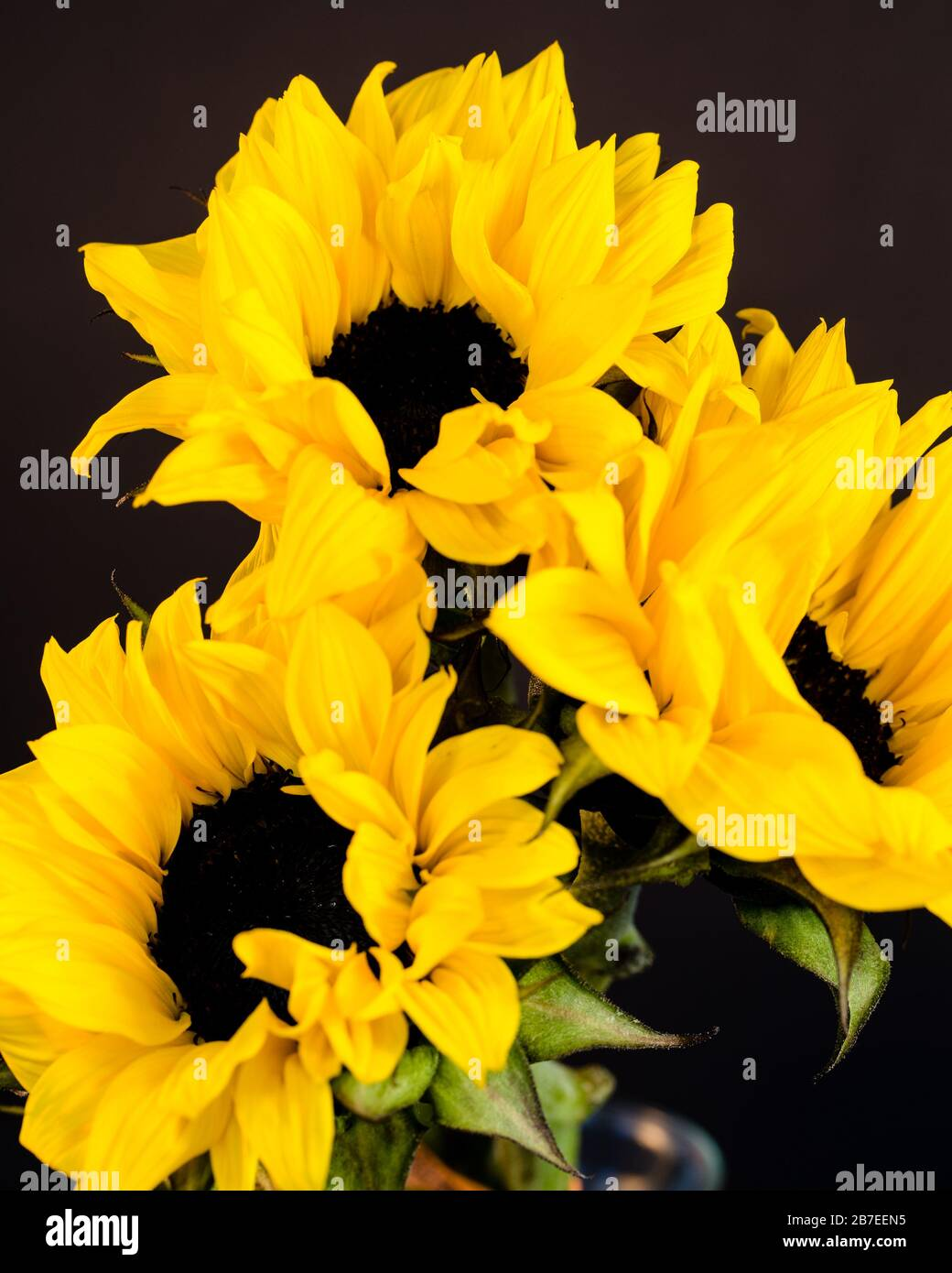 Sunflower Bouquet High Resolution Stock Photography And Images Alamy
