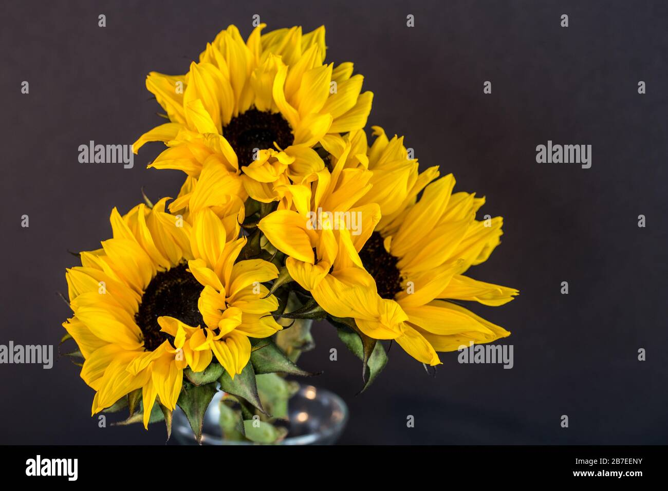 Sunflower Bouquet In A Glass Vase With A Dark Background Stock Photo Alamy
