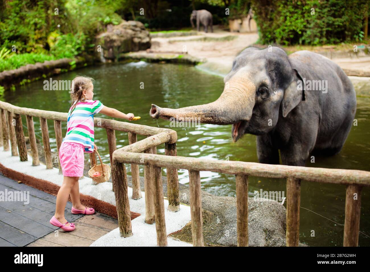 Family feeding elephant in zoo. Children feed Asian elephants in ...