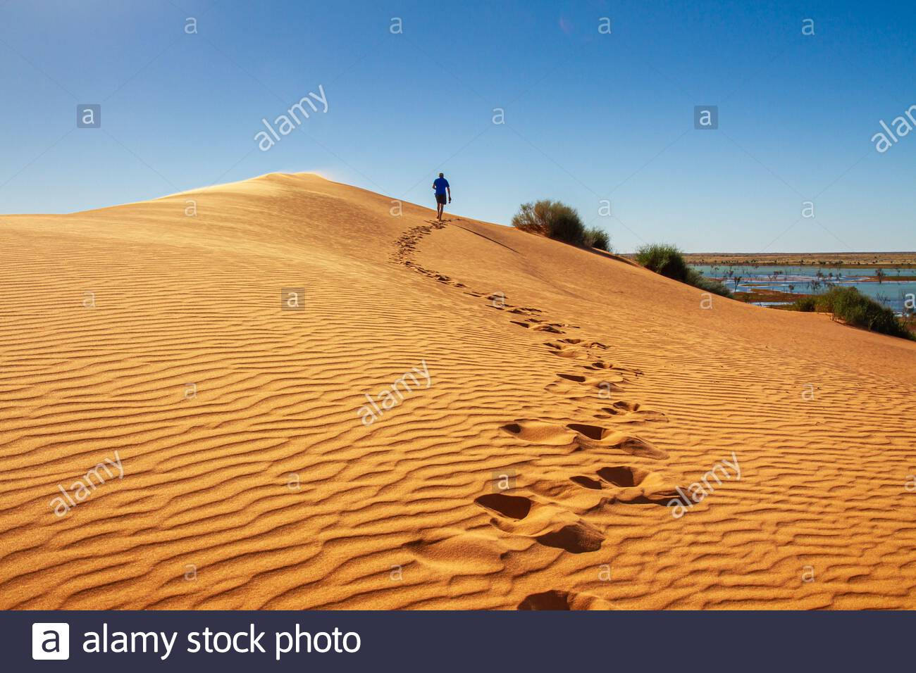The Simpson Desert is found in central Australia, accessed via Birdsville. At the start of the desert lies Big Red, an iconic sand dune. After a very Stock Photo