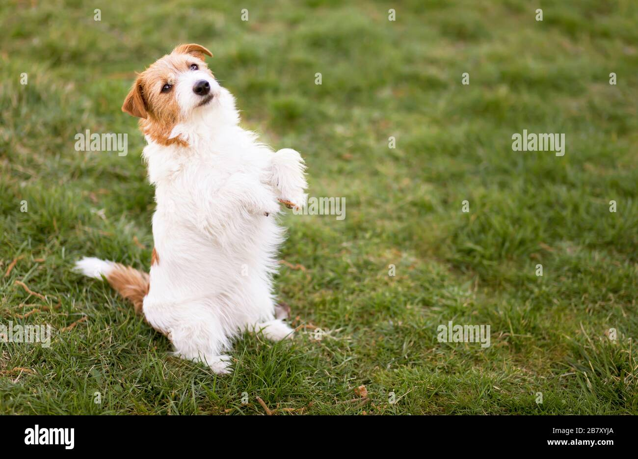 Small Cute Funny Smiling Obedient Dog Puppy Sitting In The Grass Pet Training Obedience Concept Stock Photo Alamy