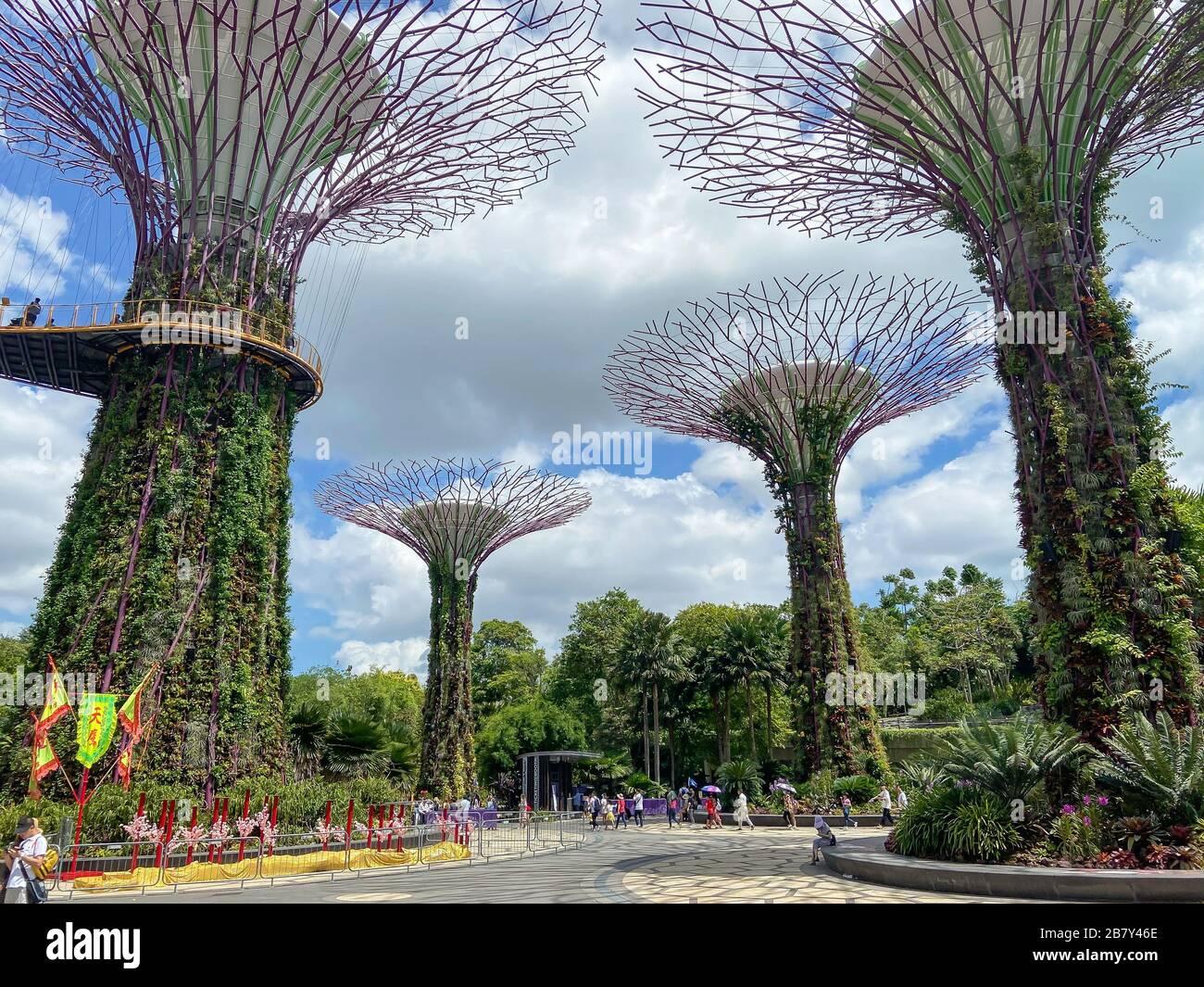 Supertree Grove and Skyway, Gardens by the Bay, Marina Bay, Singapore Island (Pulau Ujong), Singapore Stock Photo