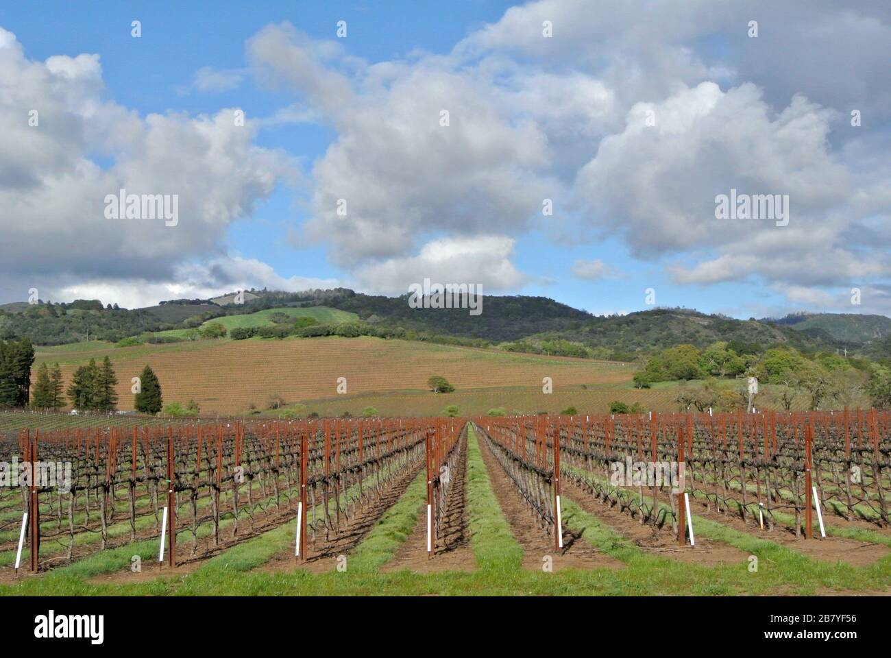 hwy 12 winery in sonoma county wine country california Stock Photo