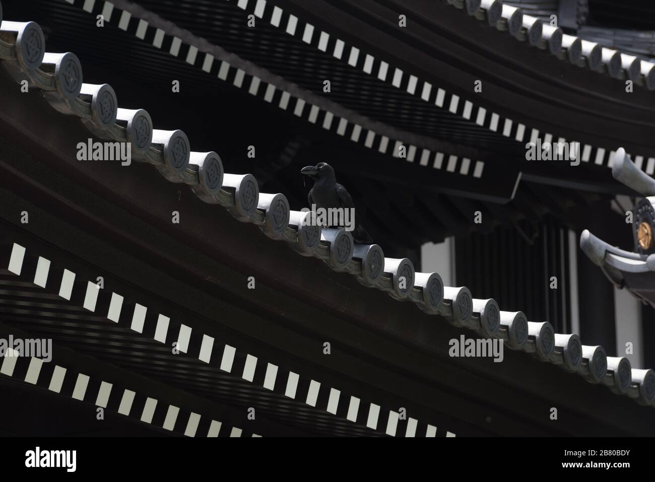 a crow on the rooftop of a shrine in Japan Stock Photo