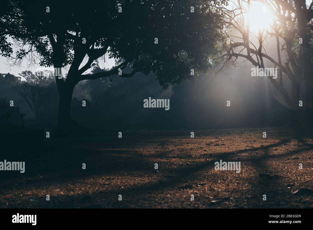 tropical forest morning scene, nature sunlight background Stock Photo