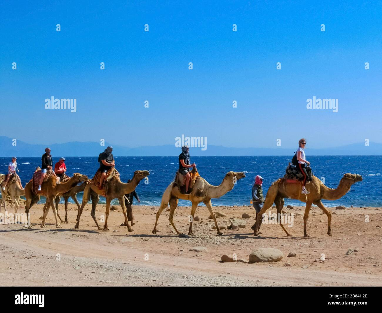 Sharm El Sheikh Egypt February 17 2020 Tourist Rides Camel On Beach With Help Of Egyptian Man On February 17 2020 In Sharm El Sheikh Egypt Stock Photo Alamy
