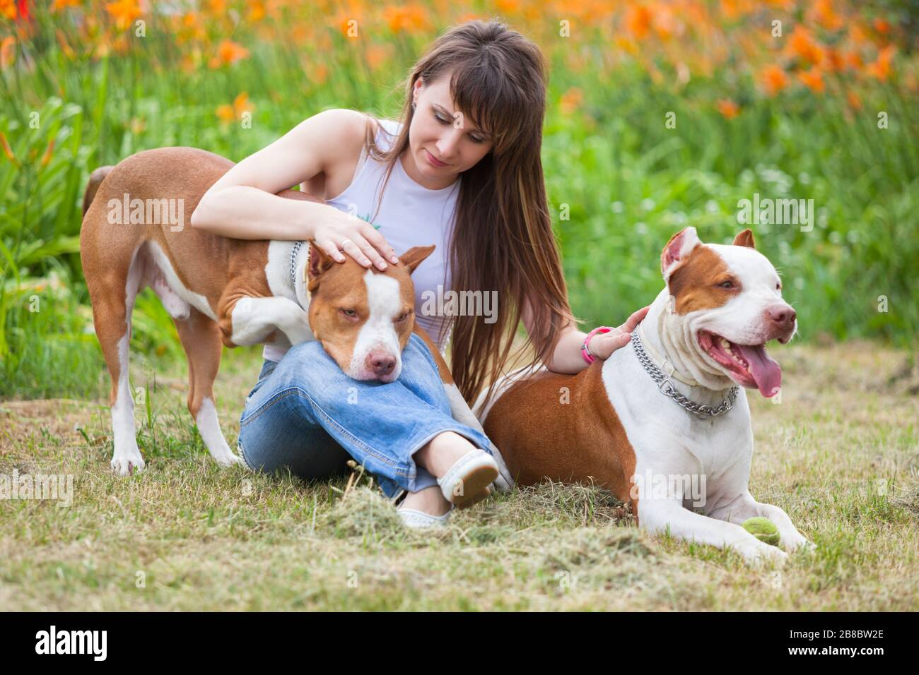 """Poster 19/"""" x 13/"""" Pit Bull Terrier Run Protruding Tongue"""