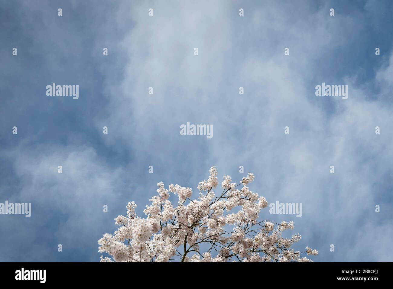 Streatham, London, UK. 21st March, 2020. UK Weather: Early spring conditions in Streatham Common in South London, England. Credit: Sam Mellish / Alamy Live News Stock Photo