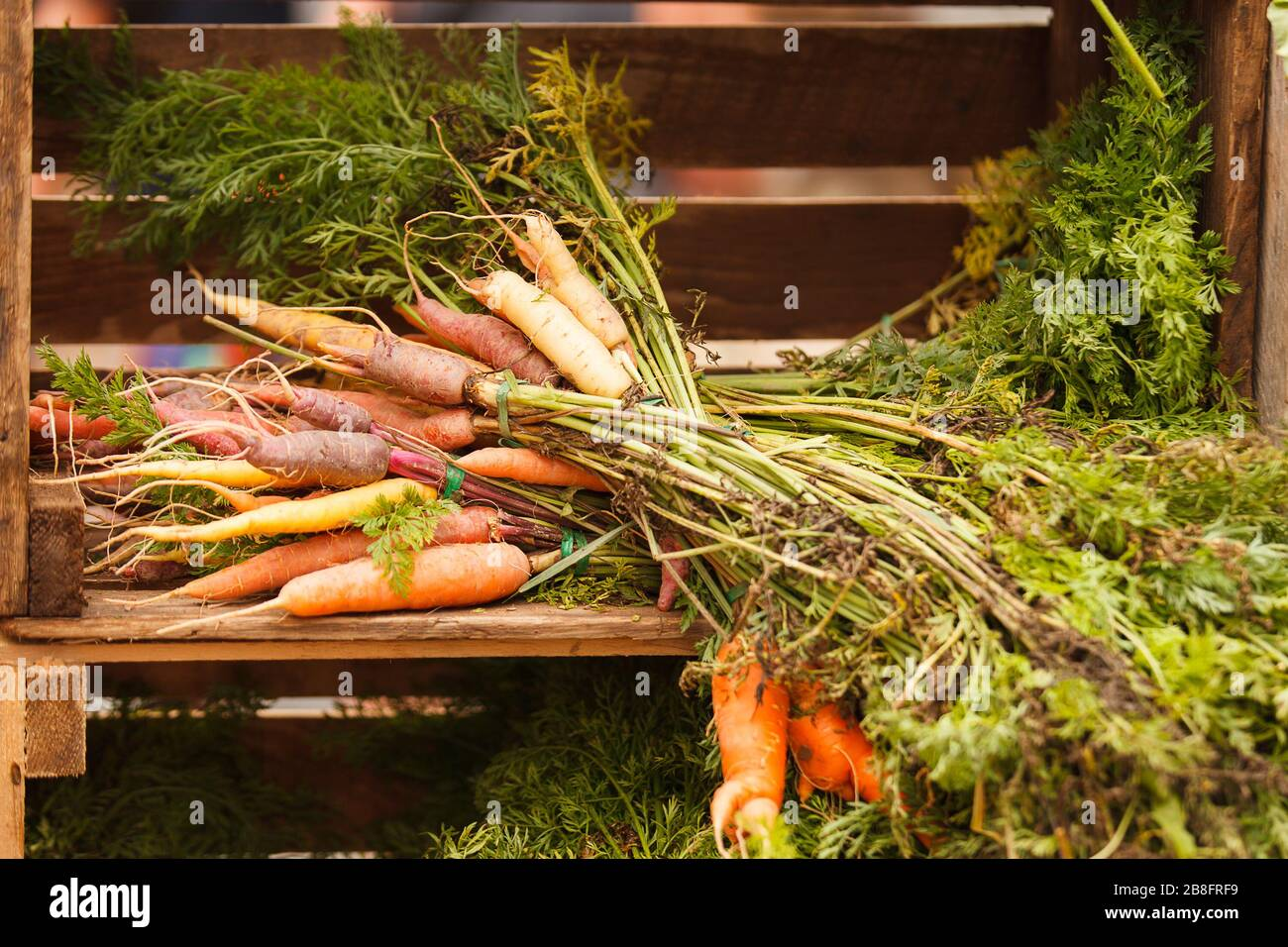 Bundles of carrots in a wooden crate Stock Photo