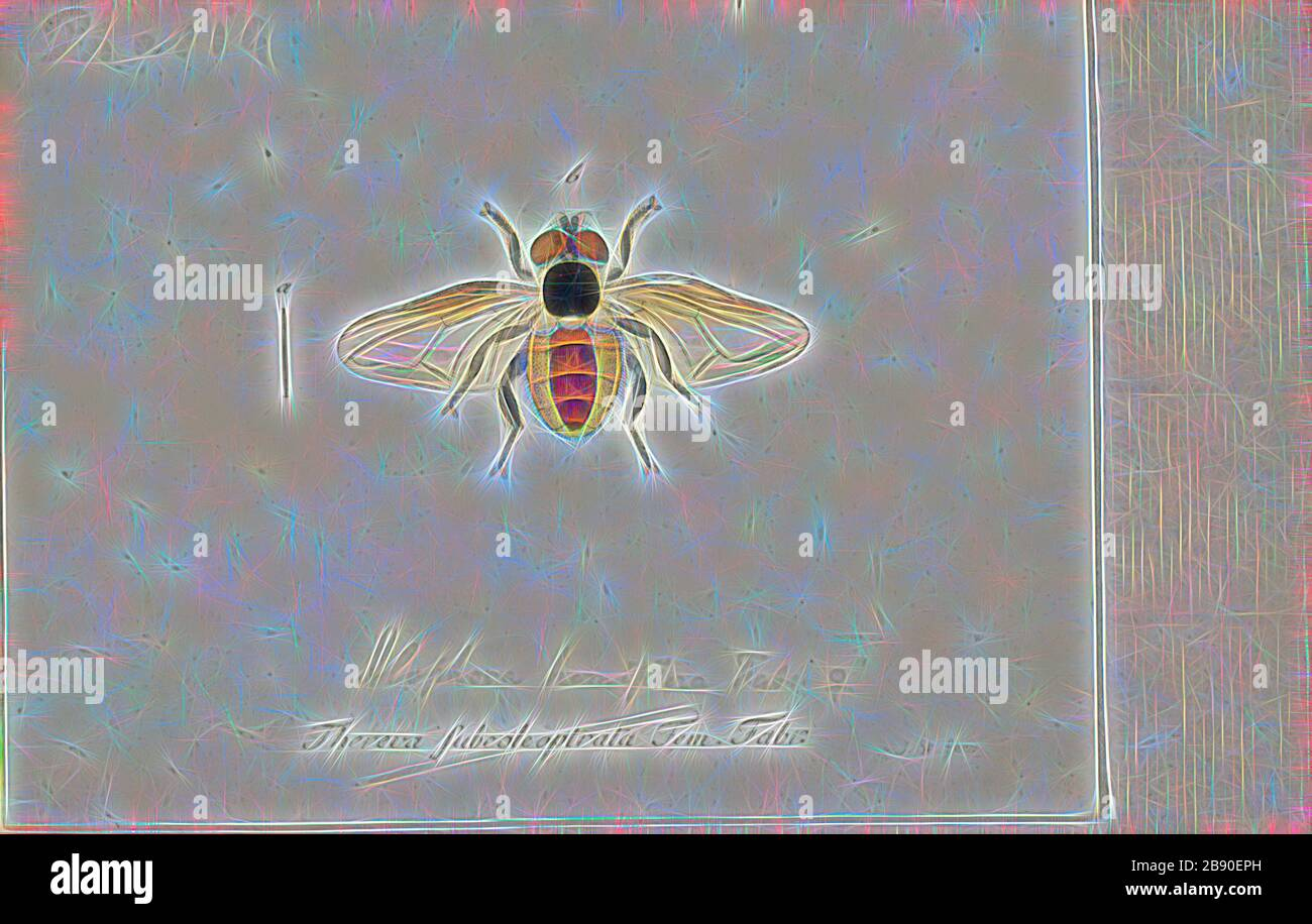 Alophora, Print, Phasia is a genus of flies in the family Tachinidae., Reimagined by Gibon, design of warm cheerful glowing of brightness and light rays radiance. Classic art reinvented with a modern twist. Photography inspired by futurism, embracing dynamic energy of modern technology, movement, speed and revolutionize culture. Stock Photo