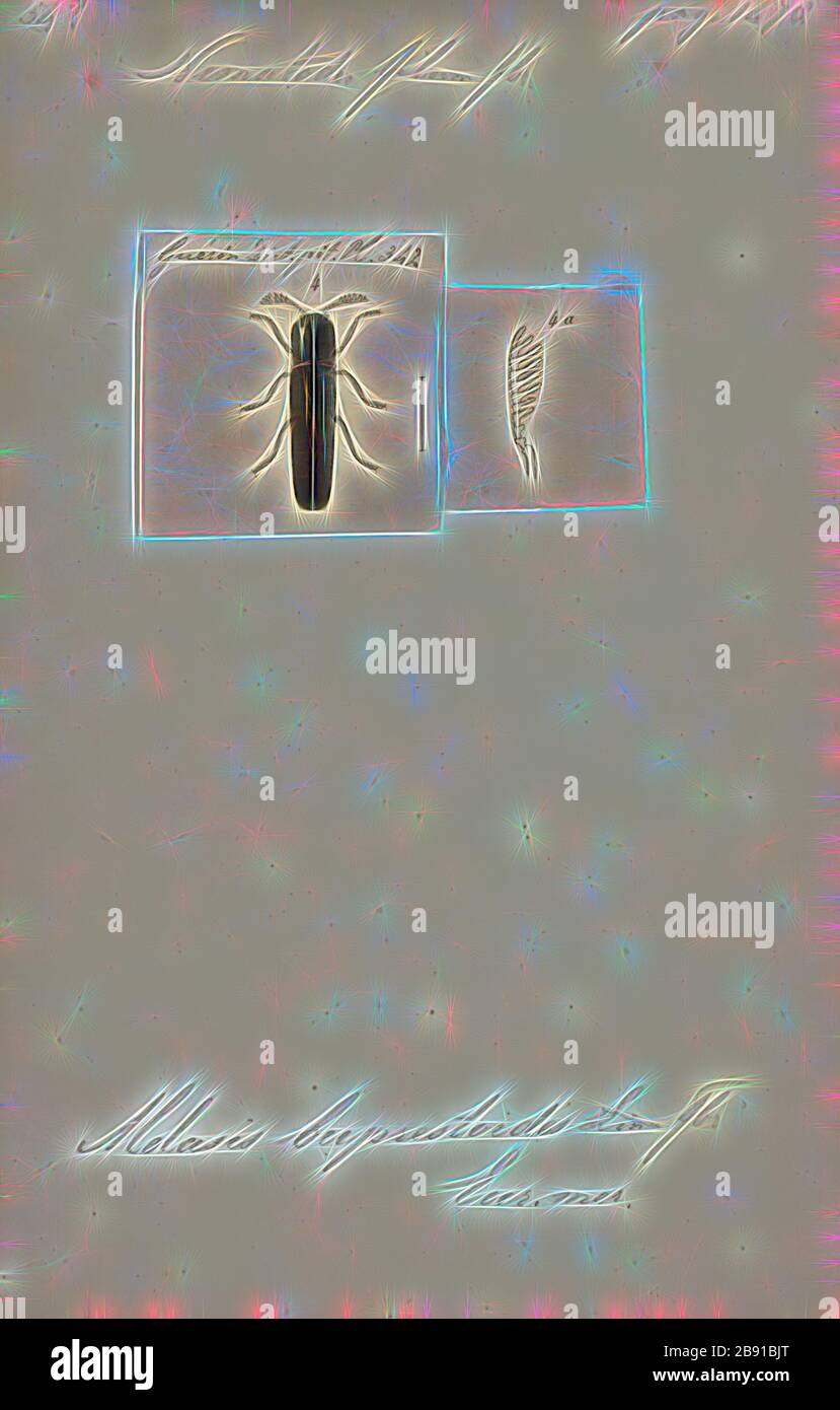 Nematodes Print The Nematodes Or Roundworms Constitute The