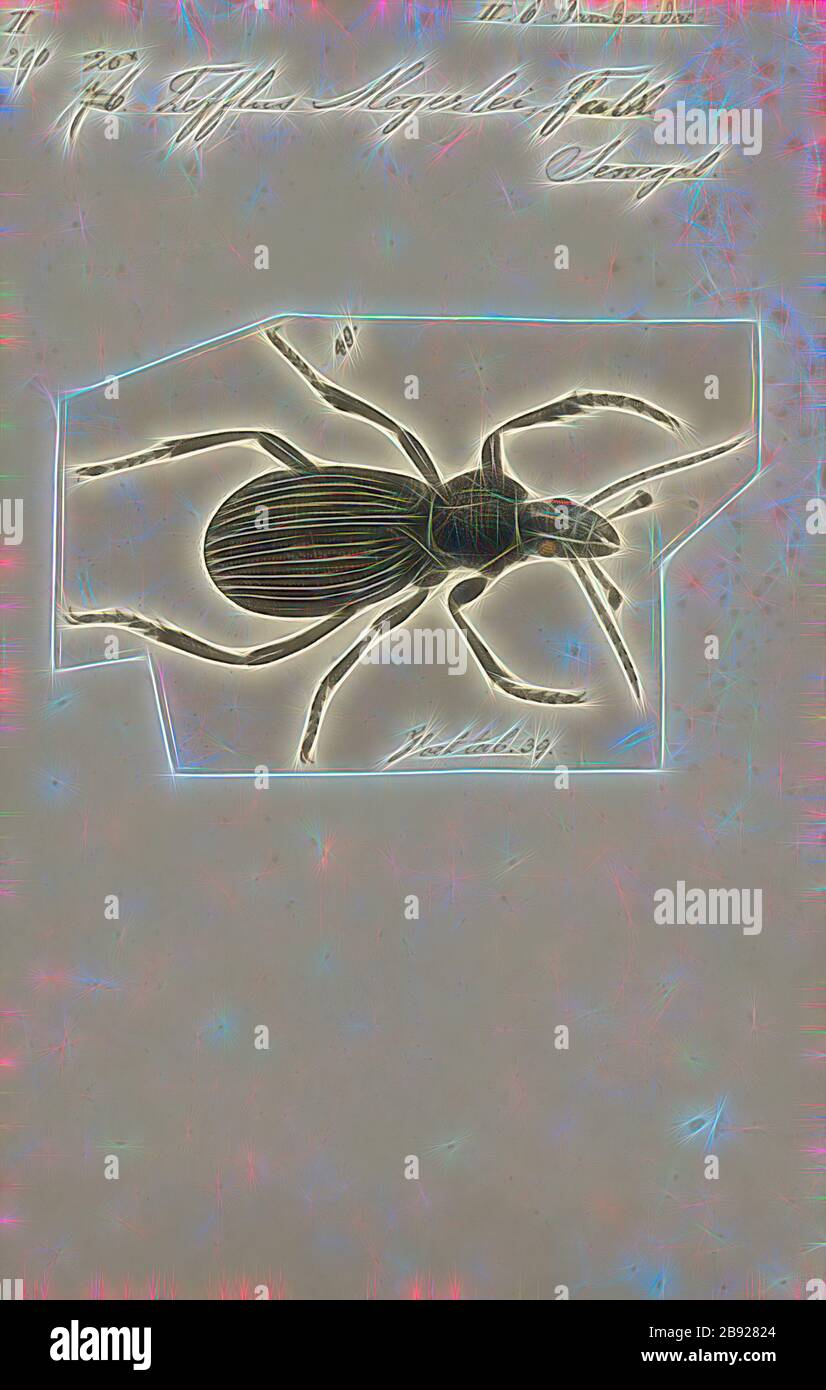 Tefflus, Print, Tefflus is a genus of large, black and flightless Afrotropical ground beetles in the tribe Panagaeini. They are broadly similar to the Anthiini ('oogpisters'), but are not colourful, and have a six-sided and flattish pronotum. The distinct longitudinal carinae (ridges) on their elytra are separated by two rows of punctures running along the striae (grooves). Males have some segments of the forelegs enlarged., Reimagined by Gibon, design of warm cheerful glowing of brightness and light rays radiance. Classic art reinvented with a modern twist. Photography inspired by futurism, e Stock Photo